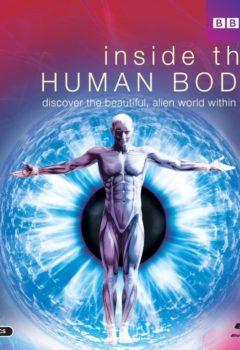 Постер к фильму – Внутри человеческого тела (Inside the Human Body), 2011